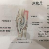 江別 ひざ内側の痛み