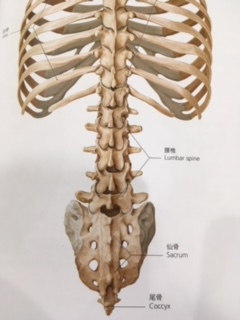追突事故後の腰の痛み